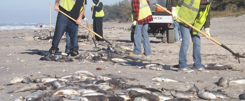 Beach covered with hundreds of dead fish!