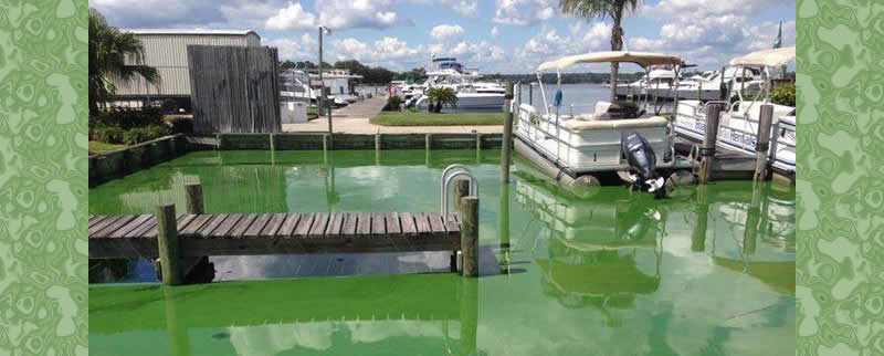Green slime fouls the water at a marina on Doctor's Lake – a tributary of the St Johns River in Jacksonville, Fla